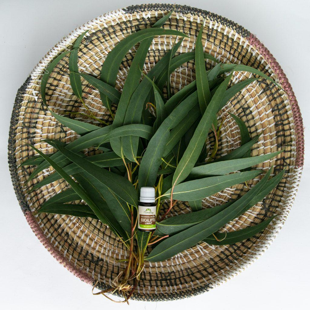 óleo de eucalipto Nutriboty